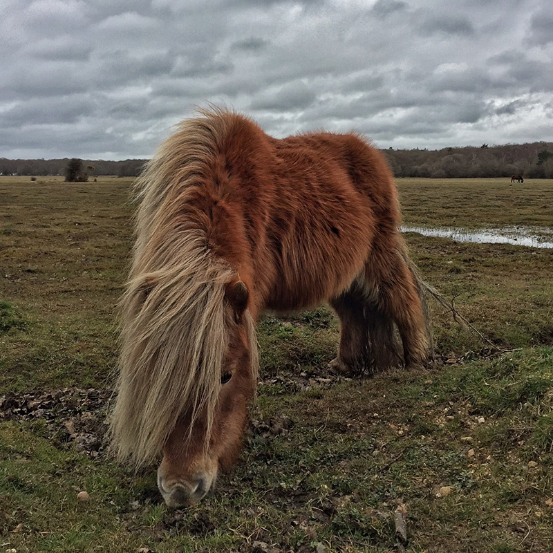 Splodz Blogz | New Forest Pony