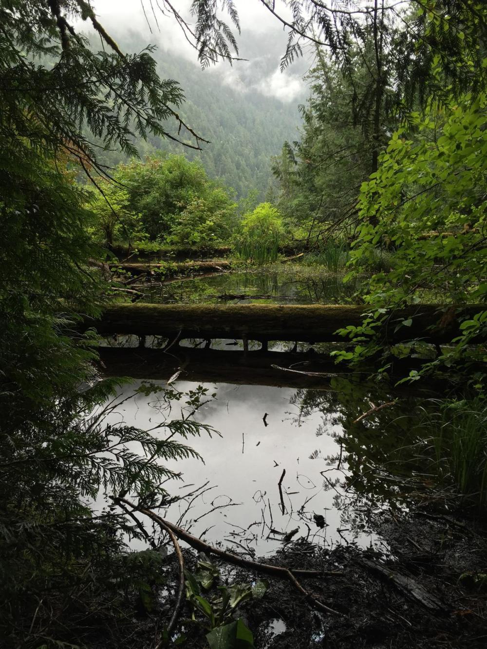 Splodz Blogz | Favourite Photos | Canada - Cathedral Grove, MacMillan Provincial Park