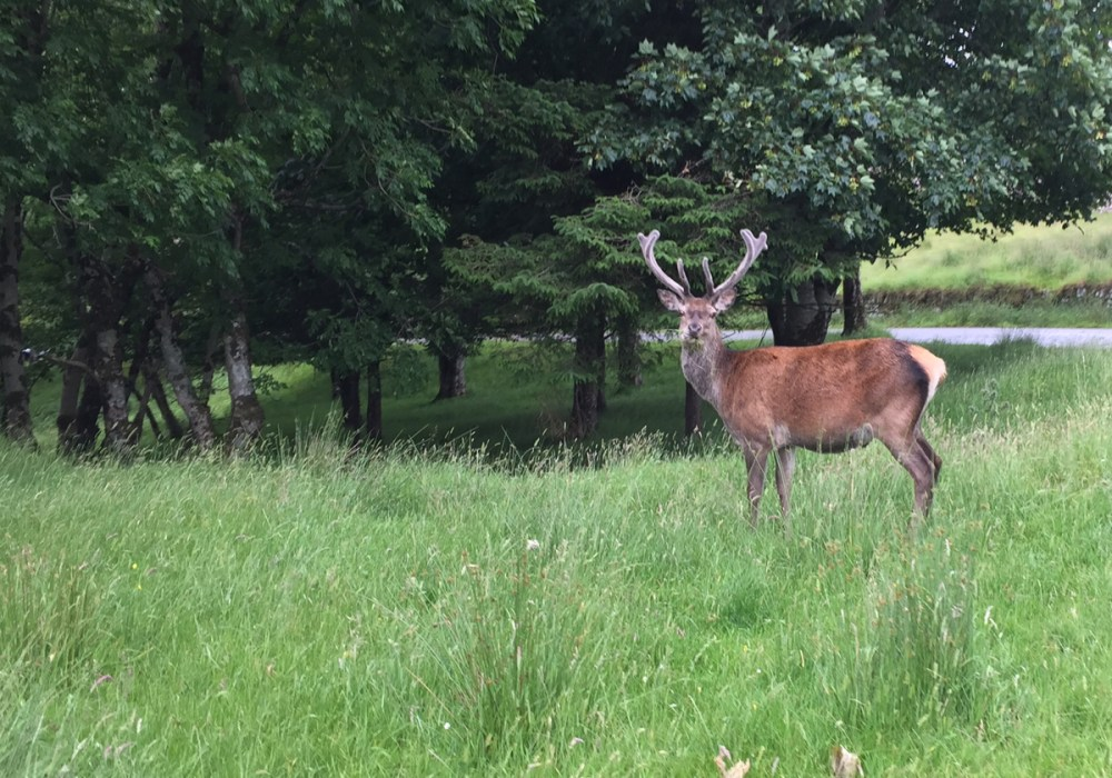Splodz Blogz | NC500 | Red Deer at Applecross