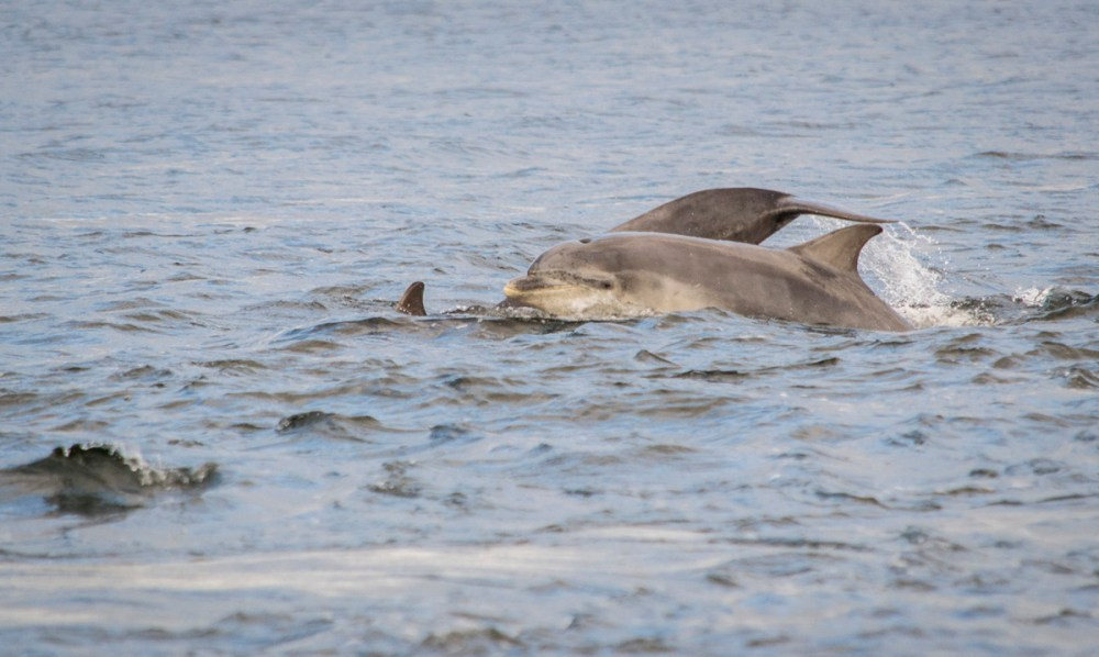 Splodz Blogz | NC500 | Dolphins in the Moray Firth