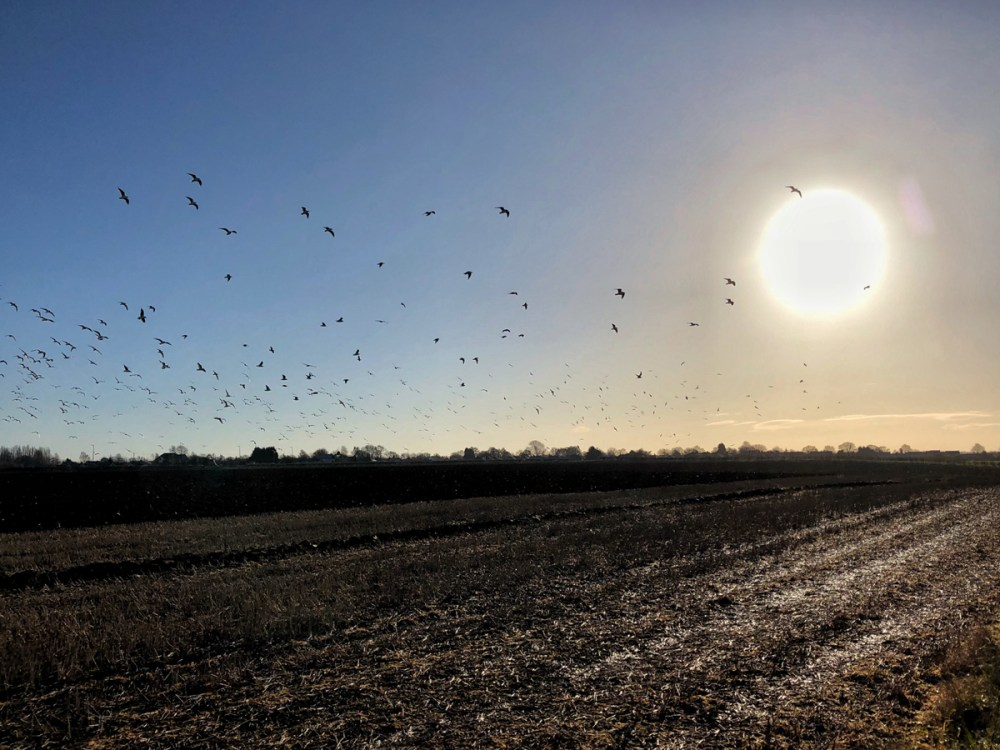 Splodz Blogz | Birds in Lincolnshire