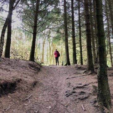 WALKING TO DALBY FOREST