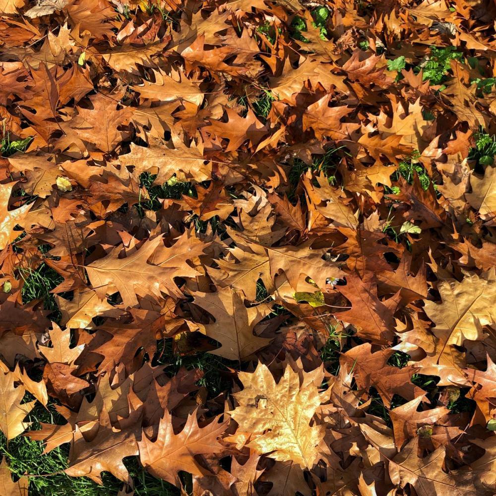 Splodz Blogz | One Hour Outside - Autumn Leaves