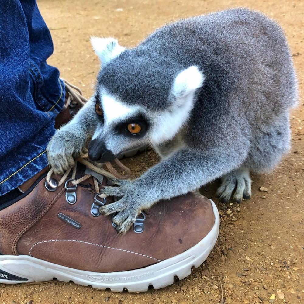 Splodz Blogz | One Hour Outside - Cotswold Wildlife Park