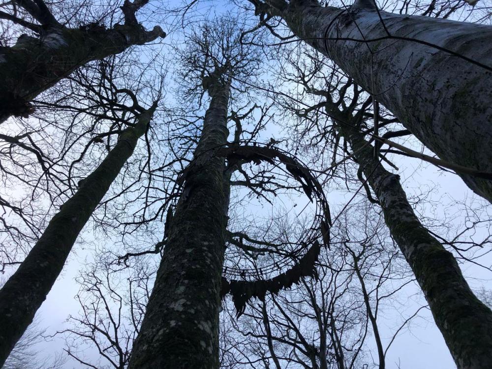 Splodz Blogz | Forest of Dean Sculpture Trail
