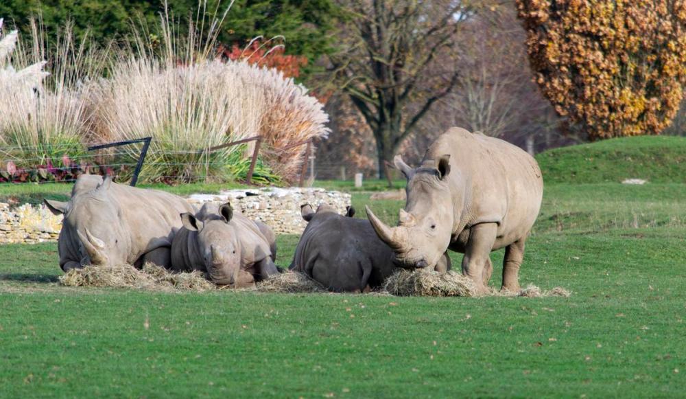Splodz Blogz   White Rhino at Cotswold Wildlife Park