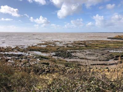 Splodz Blogz   Newport Wetlands