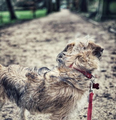 Splodz Blogz | GetOutside Activity Inspiration for Lock Down - Dog Walking