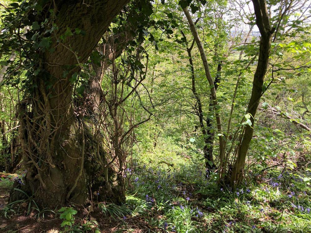 Splodz Blogz | Tree on Chosen Hill Churchdown