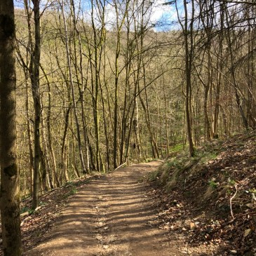 HIKING THE COTSWOLDS | CLEEVE HILL AND BREAKHEART PLANTATION