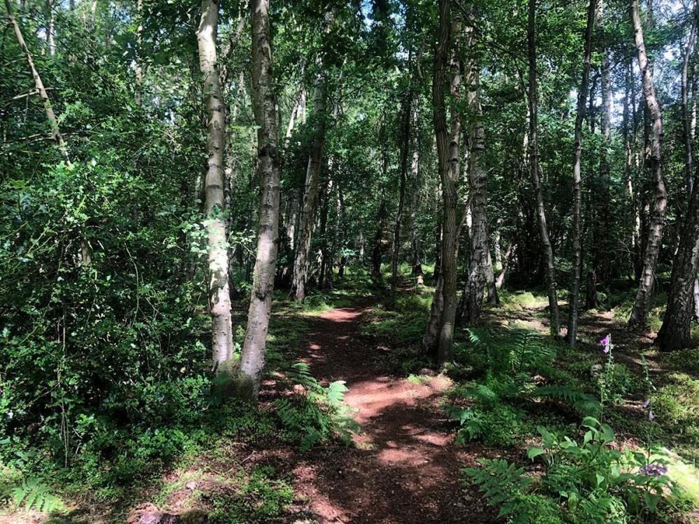 Splodz Blogz | Woodland Path