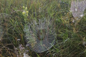webs-and-dew