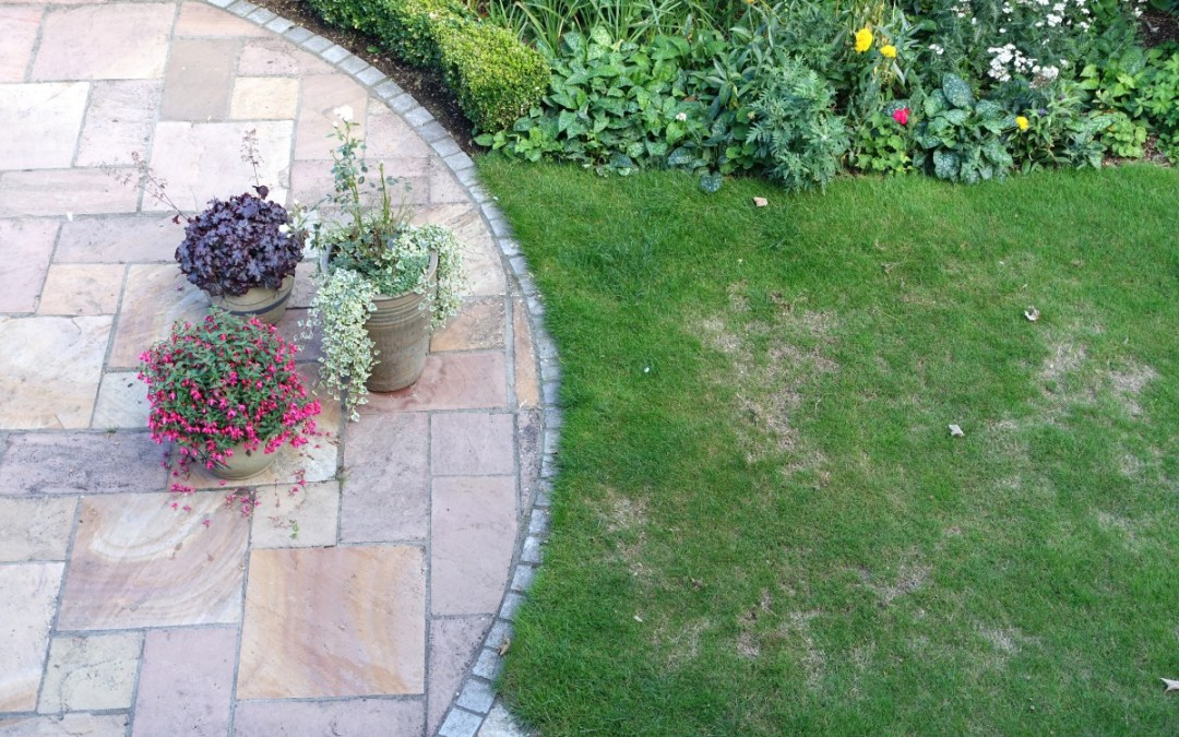 Reasons For Patchy Grass