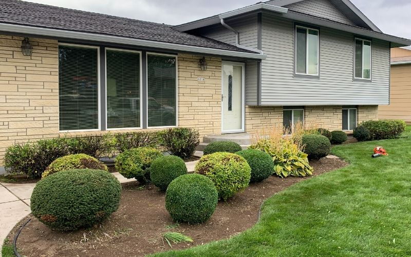The same shrubs from the above picture, but after pruning. The shrubs are neatly and uniformly pruned.