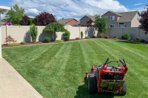 Commercial walk-behind lawn mower in a back yard after mowing