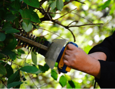 Pruning The Shrubs Spokane's Finest Lawns