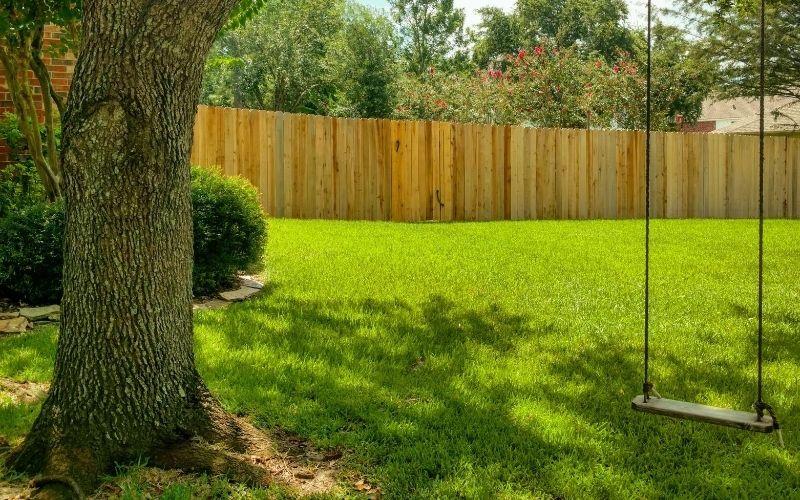 Shade Tree in Backyard
