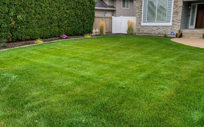 A small front lawn after a Spring clean up service. The grass has been mowed and is free of all clippings and debris.