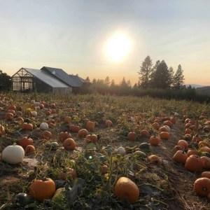 Pumpkin Farms Spokane
