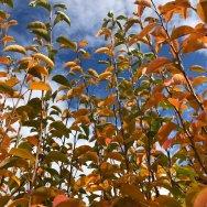 fall leaves Spokane