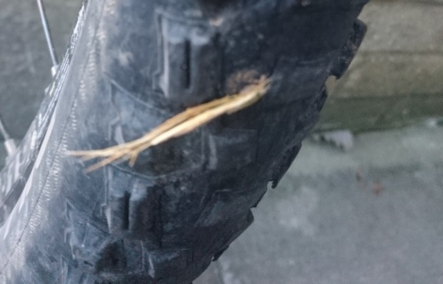 The thorn in my tyre