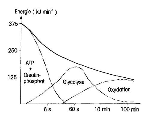 Energieumsatz