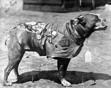 Sgt. Stubby is the official mascot of the 102nd Infantry Regiment (United States)