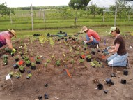 Master Gardener Volunteers Planting