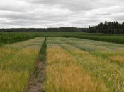 Barley and Oat Variety Trials