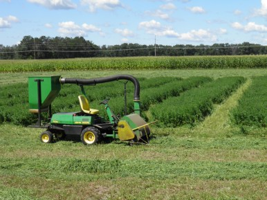 Alfalfa Fertility Trial Harvest