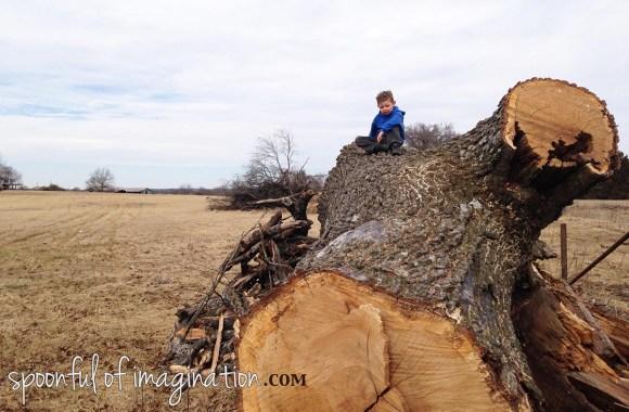 climbing_a_tree