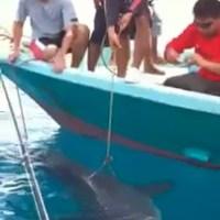 Big Shark at Kuala Rompin