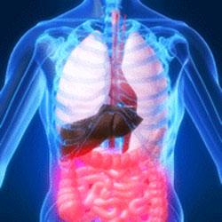 Afbeeldingsresultaat voor metabolisme