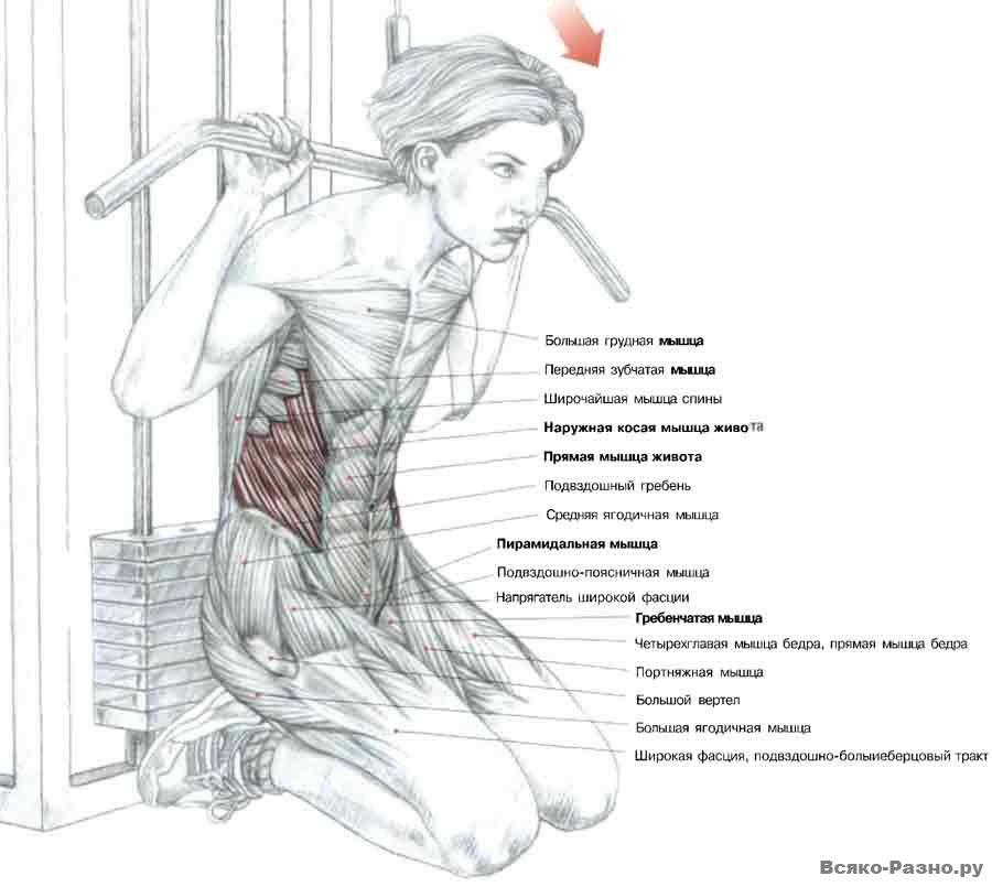 упражнения для мышц пресса с картинками месторасположение теле