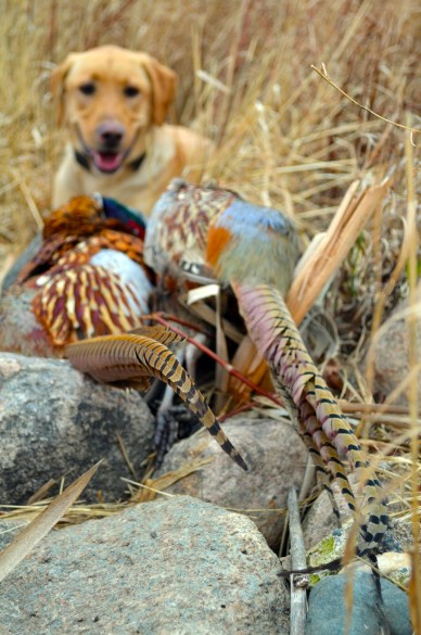 Mika finds me some roosters!