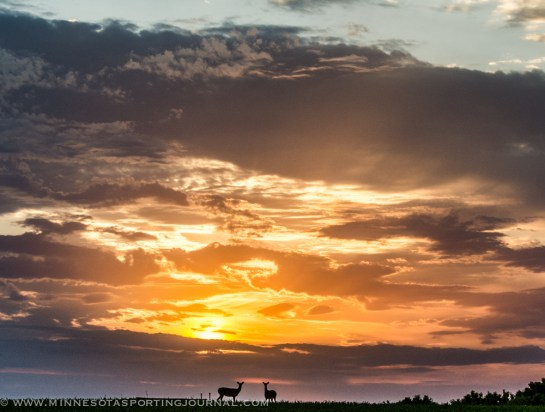 62013 - sunset deer 2
