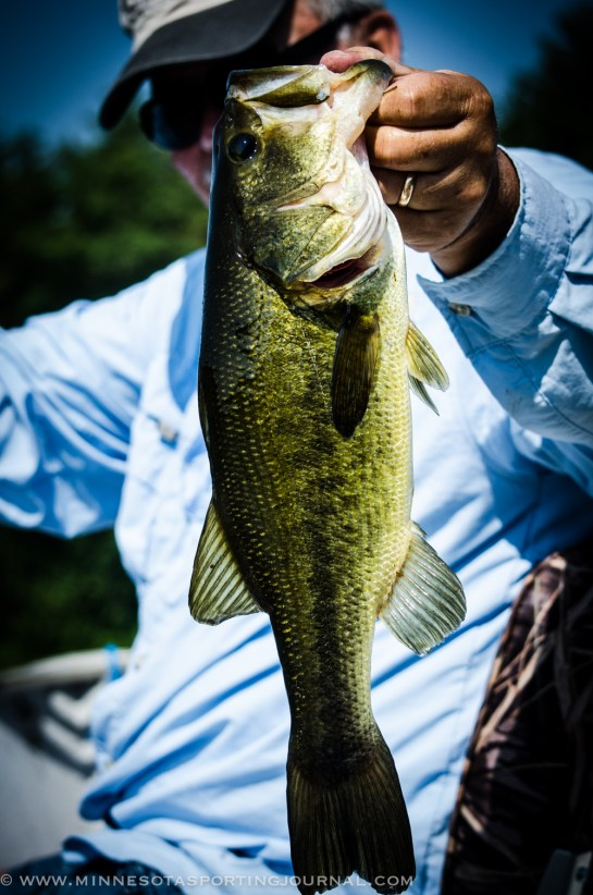 7413 - bass ron