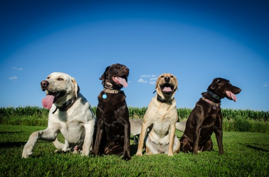 8213 -  all four dogs