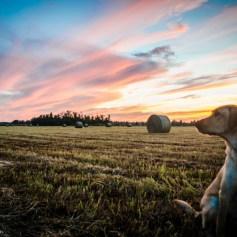Mika enjoying the sunset.