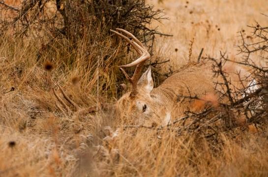 ND Deer (1 of 1)-3