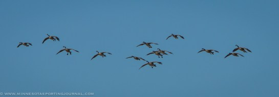 31314 - geese ducks spring migration-6