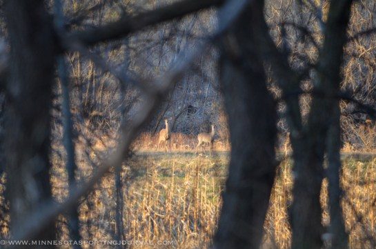 5114 - deer-9