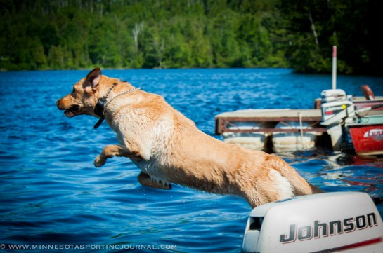 Mika did some more dock jumping.