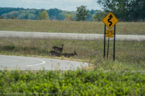A wide array of wildlife can be found in Camp Ripley, giving way to special deer hunting opportunities.