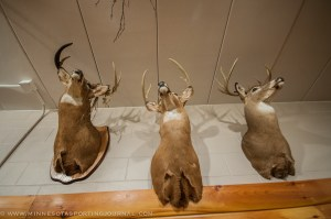 The buck on the left was tangled in a parachute.