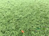 Kunstrasen Faser Zersplissen