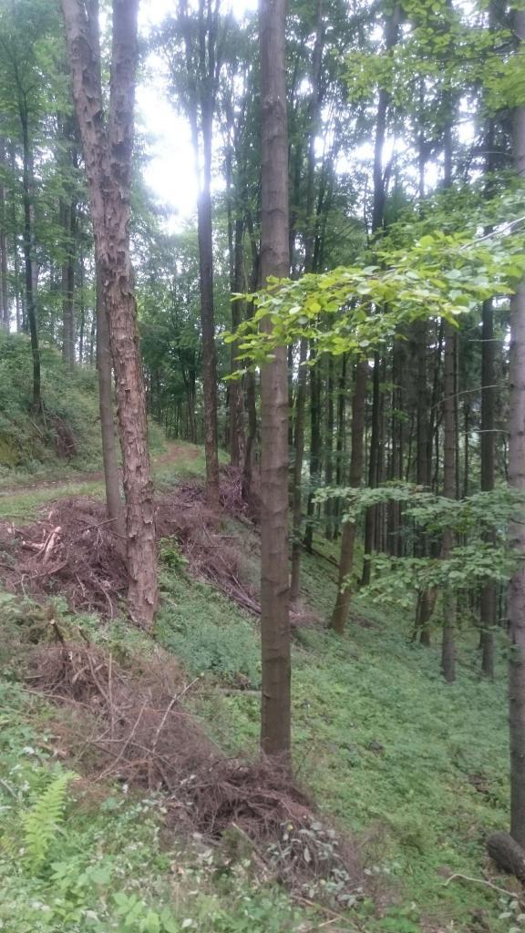 góry, las, MTB, Głuszyca