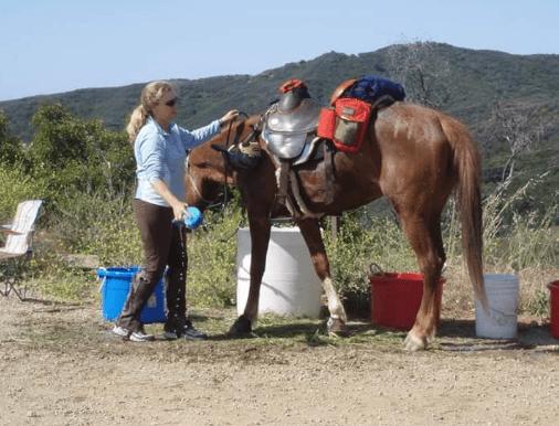 bob marshall treeless sports saddle rider