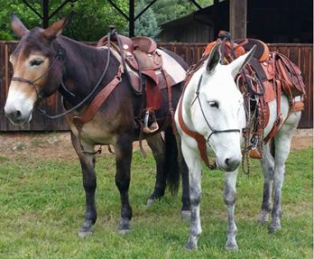 Genuine Bob Marshall Original Treeless Sports Saddle Riders Gallery