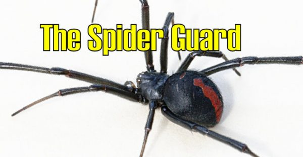 How to Dominate Your Opponent from Spider Guard